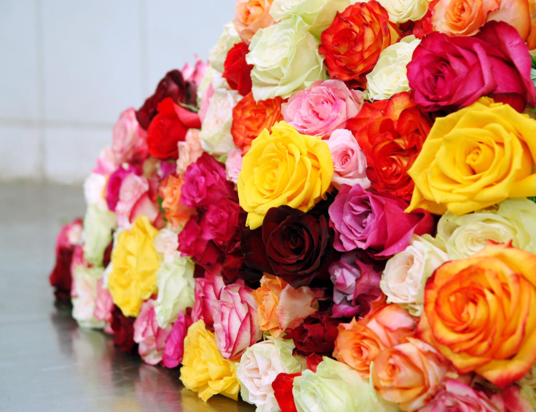 Les couleurs de la rose sont tout aussi nombreuses que ses variétés.